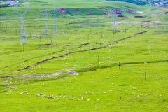 Prairie Photo libre de droits