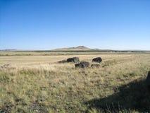 prairie Fotografie Stock