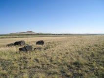prairie Fotografia Stock