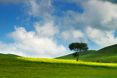 Prairie. Under blue sky in the Inner Mongolia Autonomous Region,china stock photography