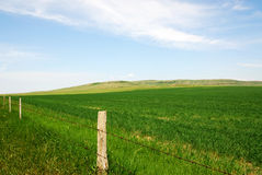 Prairie Royalty Free Stock Photos