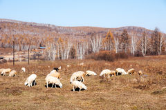 Prairie autumn of China Stock Photo