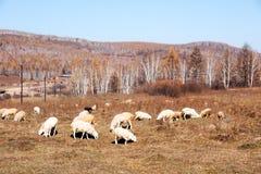 Prairie autumn of China. China's Inner Mongolia grassland scenery Stock Photo