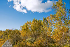 The prairie autumn scenery royalty free stock images
