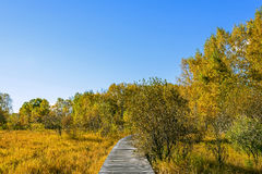The prairie autumn scenery royalty free stock photo