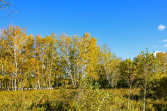 The prairie autumn scenery stock photography