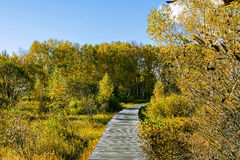 The prairie autumn scenery stock image