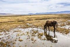 Prairie avec de l'eau Images libres de droits