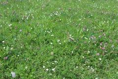 Prairie avec des fleurs photographie stock