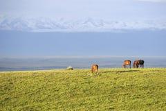 Prairie avec des montagnes de neige Images stock