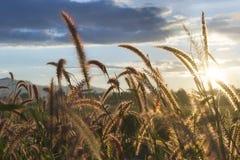 Prairie backlight Stock Fotografie