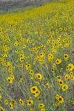Prairie in bloom Stock Photo