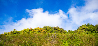 Prairie and blue sky Royalty Free Stock Image