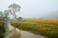 Prairie brook house, fog. House among trees, fog and along a river, shot in Thailand Royalty Free Stock Photography