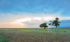 Prairie Cemetery.tif Royalty-vrije Stock Fotografie