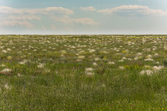 Prairie, covered with flowering stipa. The steppe in the spring season. Stock Photos