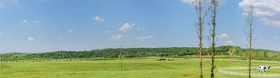 The prairie and Cow statue Royalty Free Stock Photography