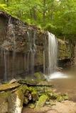 Prairie Creek Falls. Prairie Creek trickling over a rock ledge Royalty Free Stock Images