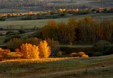 Prairie d'automne Photographie stock libre de droits