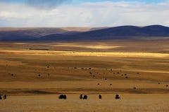 Prairie d'automne dans la région de Naqu du Thibet images libres de droits
