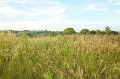 Prairie dans le lever de soleil de matin Photographie stock