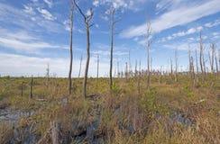 Prairie dans un marais à distance Images libres de droits