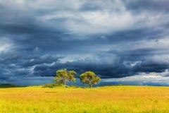 Prairie de Bashang pendant l'été Images libres de droits