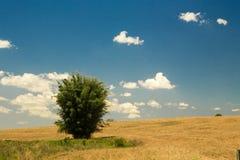 Prairie de ciel d'herbe de loi Images libres de droits