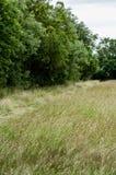 Prairie de fauche d'habitat et haie grande Image libre de droits