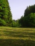 Prairie de fauche de découpage dans la forêt Images libres de droits