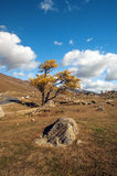Prairie in de herfst Royalty-vrije Stock Fotografie