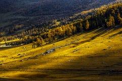 Prairie in de herfst Royalty-vrije Stock Afbeelding