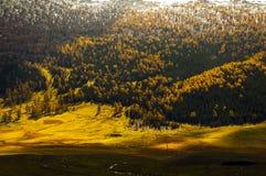 Prairie in de herfst Stock Afbeeldingen