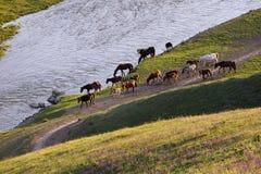 Prairie de Nalati Photo libre de droits