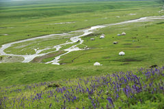 Prairie de Nalati en été Images stock