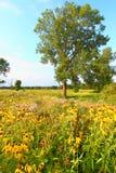 Prairie de soirée en Illinois Photographie stock libre de droits