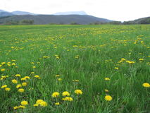 Prairie de source Photo stock