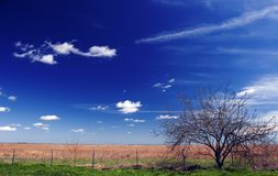 Prairie de Zuid- van Texas Royalty-vrije Stock Afbeeldingen