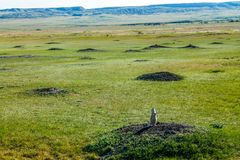 Prairie Dog City on the grasslands. Grasslands, National Park, Saskatchewan, Canada Stock Photography