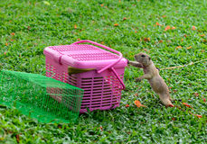 Prairie dog. Is seeking for some food Royalty Free Stock Image