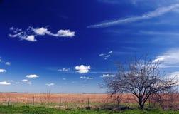 Prairie du sud du Texas Images libres de droits