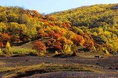 Prairie en automne Images libres de droits