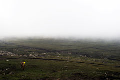 Prairie en brouillard Images stock