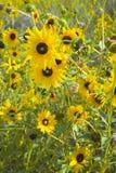Prairie en fleur Image libre de droits