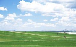 Prairie en Turquie Images stock