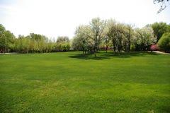 Prairie et arbres Photo libre de droits