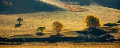 Prairie et arbres contre la lumière photographie stock