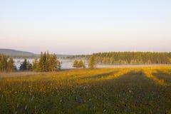 Prairie et bois en brouillard pendant le matin Photographie stock
