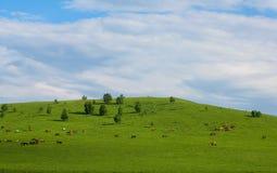 Prairie et cheval Photographie stock libre de droits