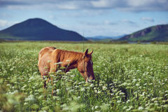 Prairie et cheval Photos libres de droits